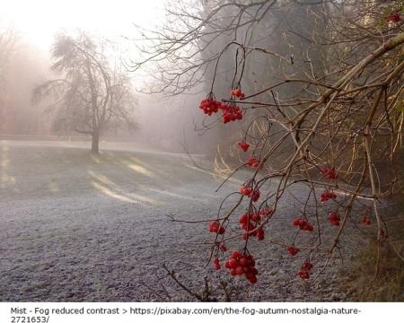 the-fog-2721653_640